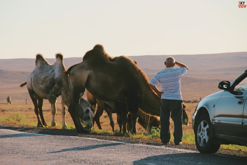 Мужчина о чем-то говорил с верблюдами :)